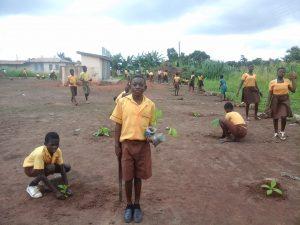 Tree planting 2015 2