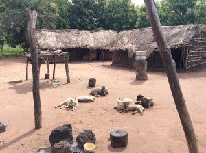Sheep and homes